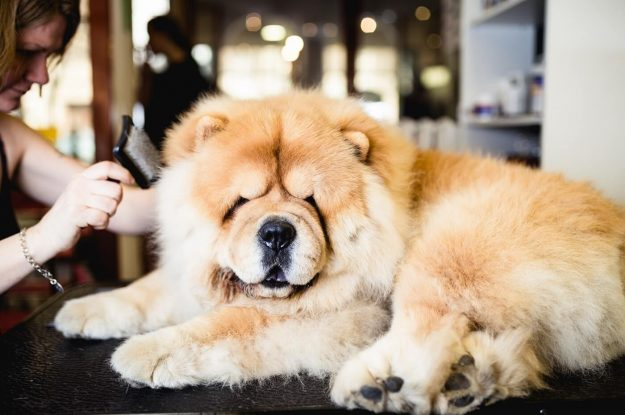 Is There Anti-freeze In My Pet Shampoo?